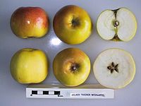 Cross section of Gelber Trierer Weinapfel, National Fruit Collection (acc. 1951-204).jpg