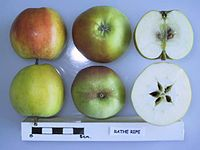 Cross section of Rathe Ripe, National Fruit Collection (acc. 1947-080).jpg