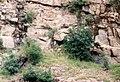 Csódi-hegyi-barlang.jpg