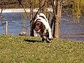 Cyther The Goose Whisperer (7052496783).jpg