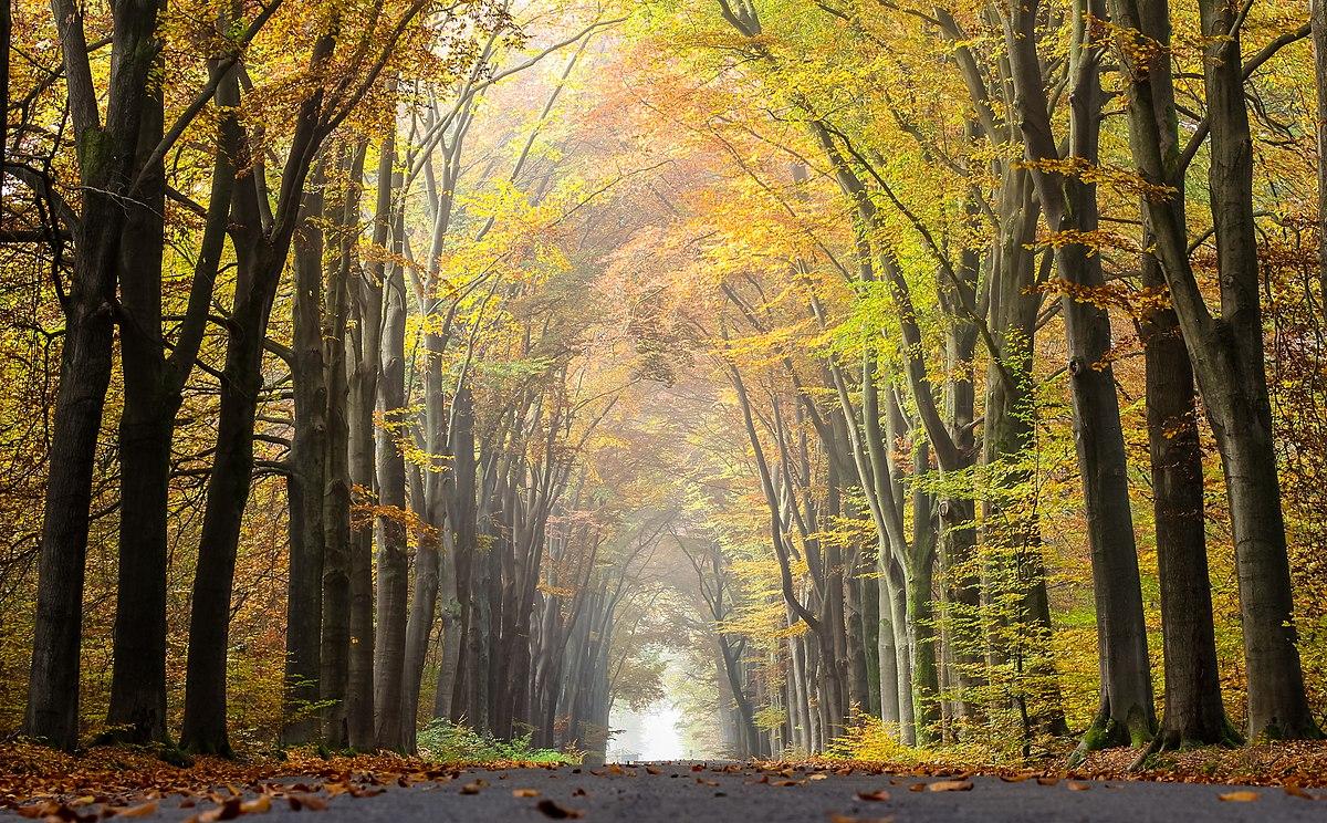 Осень — Википедия