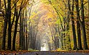Dülmen, Börnste, Waldweg -- 2015 -- 4649.jpg