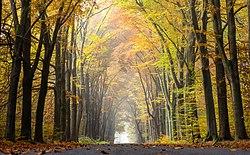 картинки начало осень
