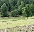 Damwild im Kurpfalz-Park - panoramio.jpg