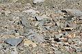 Dana Plateau Plot 079 (11878575965).jpg