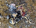 Dead bird in Windachalm 2.jpg