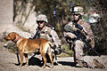 Defense.gov News Photo 111212-M-MM918-002 - U.S. Marine Corps Lance Cpls. James Blomstran left and Ryan Gerrity right and their military working dog Sage halt during a security patrol near.jpg
