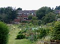 Dellfield Allotments, Berkhamsted - geograph.org.uk - 1452065.jpg
