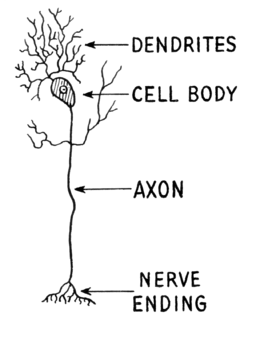 Dendrite (PSF)