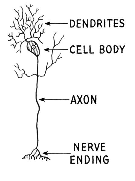 File:Dendrite (PSF).png