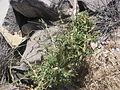 Desert plants 24.JPG