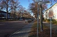 Dessau-Roßlau, Gropiusallee, natural monument Lindenallee.jpg