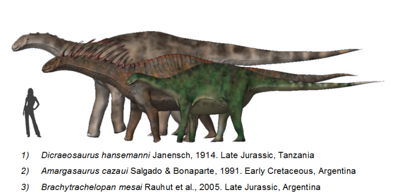 Dicraeosaurids BW