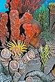 Diorama of a Pennsylanian seafloor - Caninia rugose corals, sponges, nautiloid, algae 1 (45642214721).jpg