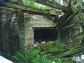 Disused Blacksmiths Forge - geograph.org.uk - 1366324.jpg