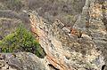 Do outro lado do furo- vista panorâmica da Pedra Furada (8050108288).jpg