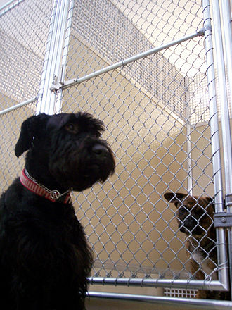 Kennel - A dog sits in front of a typical kennel panel