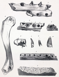 <i>Dollosuchus</i> genus of reptiles (fossil)