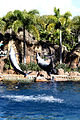 Dolphin Cove 64.jpg