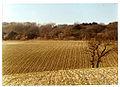 Downs at Bignor Hill Jan 77 (2082927651).jpg
