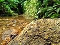 Dragon fly on the rock.jpg