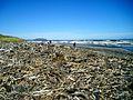 Driftwood NZ.jpg