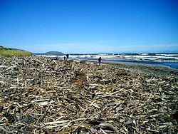 definition of driftwood