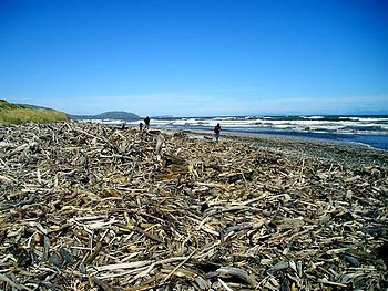 A beach covered with driftwood near Porirua, N...