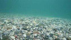 Datoteka:Drina river bottom covered in gravel near Brod na Drini.webm
