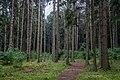 Dubrava Ščomyslickaja natural monument (Belarus) p23.jpg
