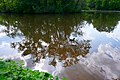 Ducks on regnitzaltwasser.jpg