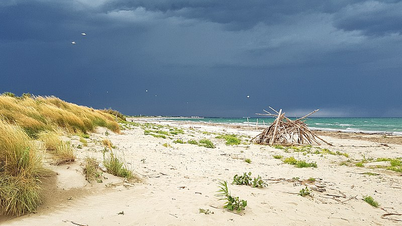 File:Dune degli Alberoni - Temporale sulla spiaggia.jpg