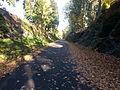 Dutchess Rail Trail in the Fall.jpg