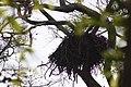 Eagle's nest (7568197130).jpg