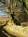 Edge of Heathercombe woods - geograph.org.uk - 282125.jpg