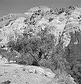 Ein Gedi Rotswand met op de voorgrond bomen en struiken, Bestanddeelnr 255-2748.jpg