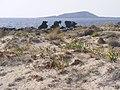 Elaphonisi - panoramio (21).jpg