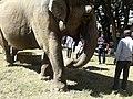 Elephant20171111 122213.jpg