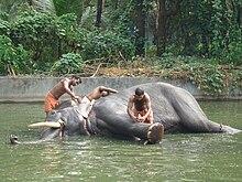 Eléphant 3 dans ELEPHANT 220px-Elephant_sanctuary_Guruvayur