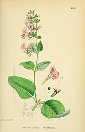 English botany, or, Coloured figures of British plants (1863) (14577932967).jpg