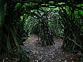 Entrance to the labyrinth, Cragside Estate - geograph.org.uk - 923013.jpg