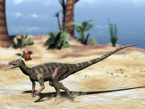 Eodromaeus NT