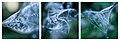 Epilobium hirsutum - Seed head - Triptych.jpg