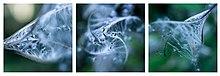 Triptych - Wikipedia