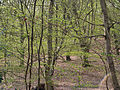 Epping Forest-green haze-396.JPG