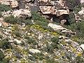 Ericameria linearifolia 9.jpg
