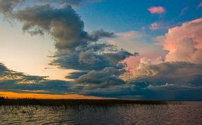 290px Esteros Del Ibera%2C Corrientes%2C Argentina%2C 2nd. Jan 2011 Flickr PhillipC %283%29