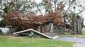 FEMA - A Home destroyed by a tree.jpg