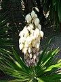 Fale - Giardini Botanici Hanbury in Ventimiglia - 689.jpg
