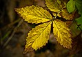 Fall Sprig (5086532750).jpg